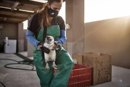 عکسهای جالب,عکسهای جذاب,نجات پنگوئنها