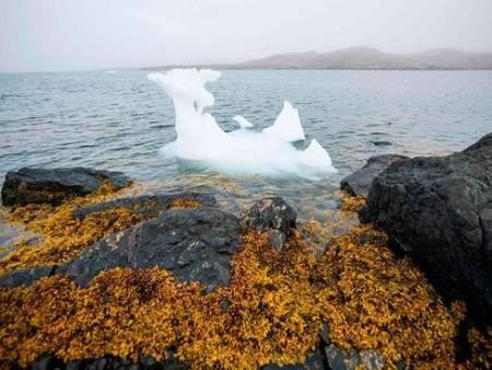 عکسهای جالب,عکسهای جذاب,یخهای قطبی