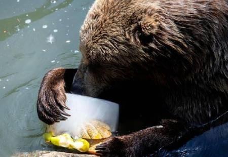 عکسهای جالب,عکسهای جذاب,میوههای یخزده