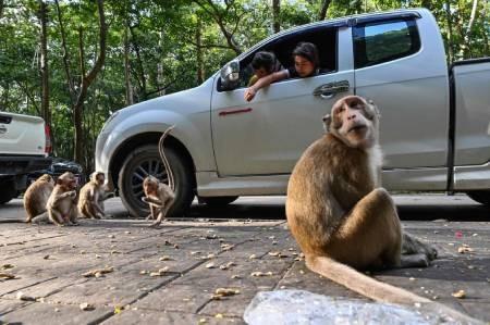 عکسهای جالب,عکسهای جذاب,میمون ها