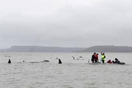 عکسهای جالب,عکسهای جذاب,  نهنگ