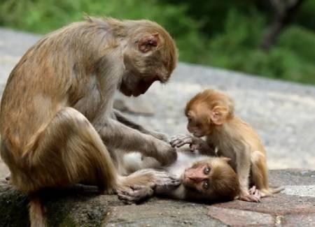 عکسهای جالب,عکسهای جذاب,میمون