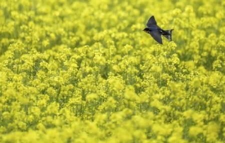 عکسهای جالب,عکسهای جذاب,پرنده