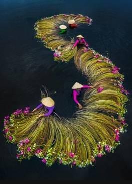 عکسهای جالب,عکسهای جذاب,گل نیلوفرآبی