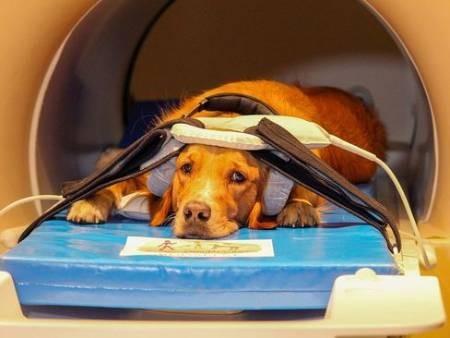 عکسهای جالب,عکسهای جذاب,آزمایشات مغزی از سگها