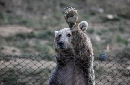 عکسهای جالب,عکسهای جذاب,خرس