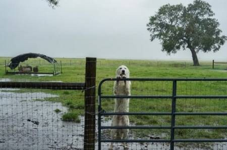 عکسهای جالب,عکسهای جذاب,سیل توفان