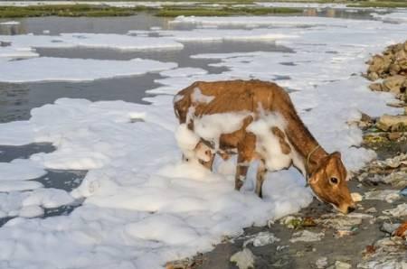 عکسهای جالب,عکسهای جذاب,رود آلوده