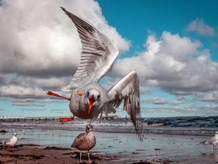 عکسهای جالب,عکسهای جذاب,مرغان دریایی