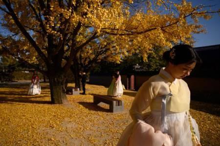 عکسهای جالب,عکسهای جذاب,درختان طلای جینکو