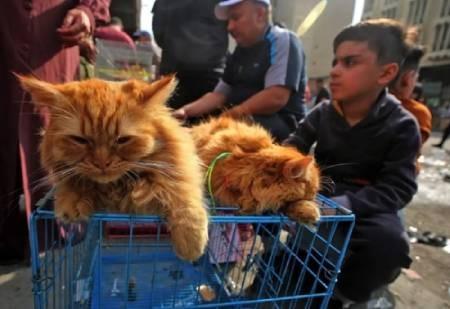 عکسهای جالب,عکسهای جذاب, گربه خانگی