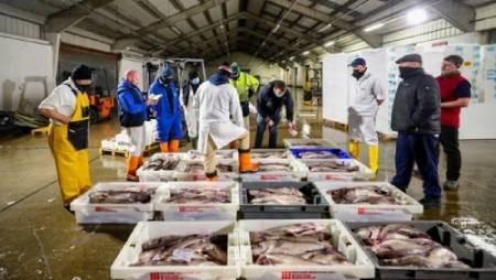 عکسهای جالب,عکسهای جذاب,بازار ماهی