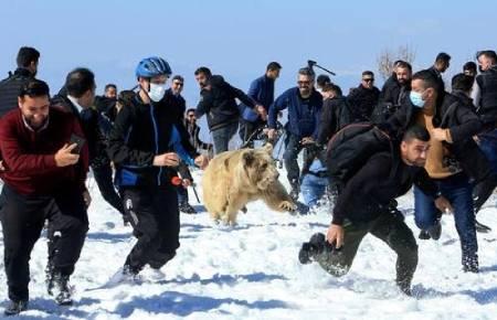 عکسهای جالب,عکسهای جذاب,فعالان حقوق حیوانات
