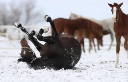 عکسهای جالب,عکسهای جذاب,کره اسب