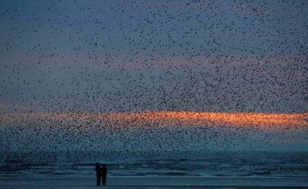 عکسهای جالب,عکسهای جذاب,ساحل بلک پول