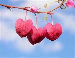 عشقورزی ,عشق واقعی ,عشق یکطرفه