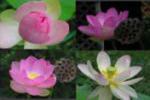 روانشناسی گل ها