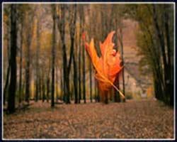 راز یک برگ پاییزی