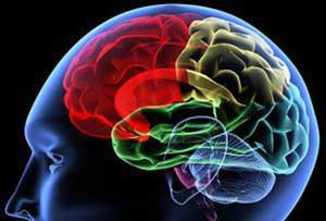 تاثیر تغذیه براعصاب و روان