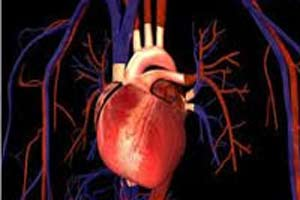 رابطه فعالیت جنسی و بیماری قلبی در چیست ؟