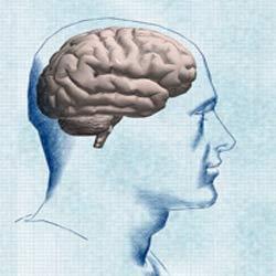 ده حقیقت  درباره مغز