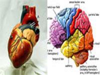 دوست دارید بدانید با قلب عاشق می شویم یا مغز