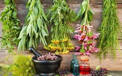 گیاهان دارویی برای افسردگی
