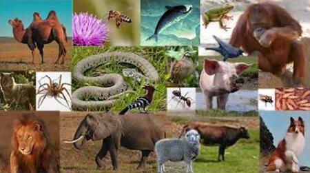 حیوانات قرآنی, اسامی حیواناتی که در قرآن آمده است, نام حیوانات قرآنی