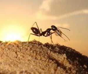 دعای مورچه