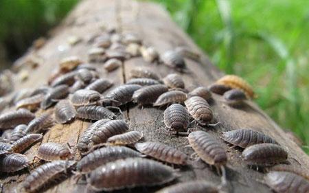 از بین بردن حشرات موذی,روش های از بین بردن حشرات موذی