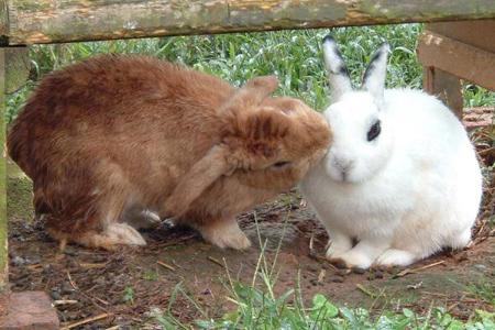 آشنایی با حیوانات, آشنایی با عادت های حیوانات