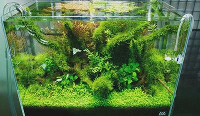 عوامل پوسیدگی گیاهان در آکواریوم, تفاوت بین آکواریوم های گیاهی