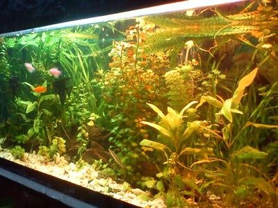 نگهداری از گیاهان آکواریومی, نگهداری از اکوسیستم تراریوم