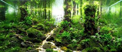 گیاهان آکواریوم, انواع آکواریوم های گیاهی