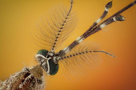 عکس های عجیب از حشرات, عجیب ترین عکس های حشرات