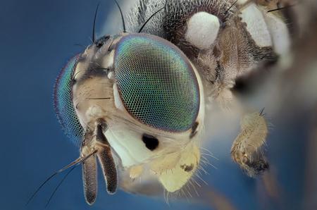 زیباترین تصاویر از حشرات, تصاویر زیبا از حشرات