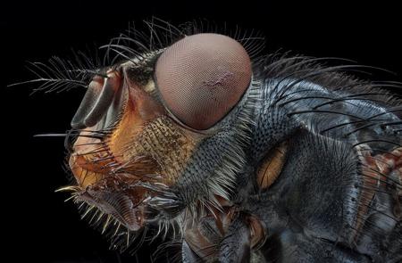 عجیب ترین عکس های حشرات, زیباترین تصاویر از حشرات
