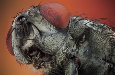 زیباترین تصاویر از حشرات,تصاویر کلوز آپ از حشرات