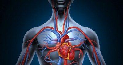 طرز انتقال خون,آشنایی با انواع سیاهرگ ها