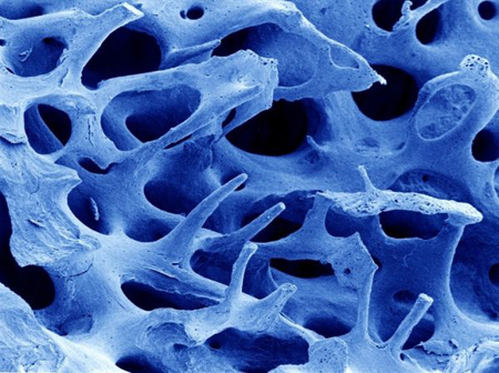 تصاویر ناخن زیر میکروسکوپ, تصاویر جالب از اعضای بدن