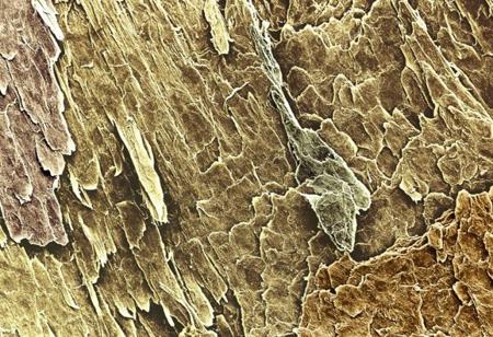 تصاویر جالب از اعضای بدن, تصاویر جالب از اعضای بدن در زیر میکروسکوپ