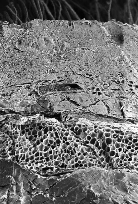 تصاویر میکروسکوپی از اعضای بدن, عکس میکروسکوپی از چشم