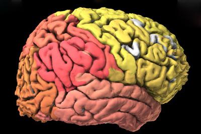 رشد مغز در تمام سنین,شیوه رشد مغز