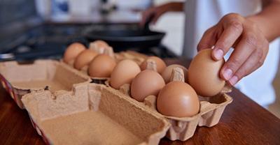 [تصویر:  cause3-sitting3-eggs2.jpg]