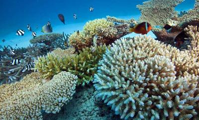 صخره های مرجانی چیست,آشنایی با انواع صخره های مرجانی