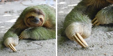 تصاویر موجوداتی با توانایی های عجیب و غریب,عجیب ترین موجودات