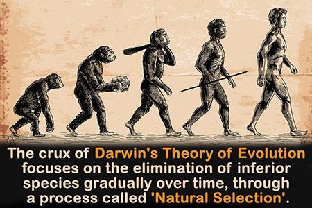 اصول نظریه داروین،نظریه داروین,نظریه تکامل داروین