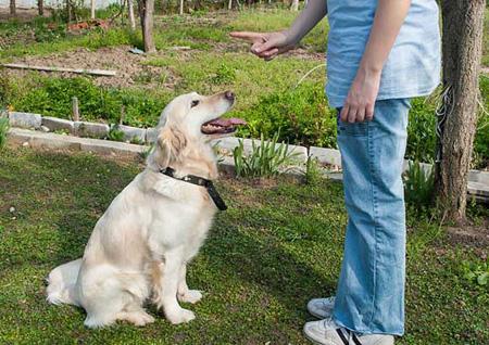 تعلیم سگ,تربیت سگ,نحوه تربیت سگ