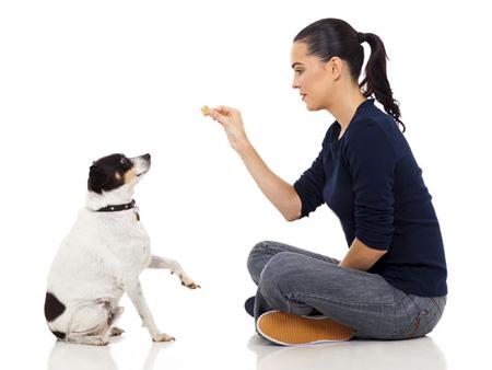 آموزش تربیت سگ,تربیت سگ خانگی,تربیت سگ