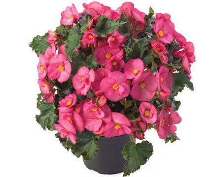 درمان بیماری گل های آپارتمانی, آشنایی با گل های آپارتمانی
